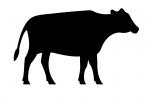 Les incontournables au lait de vache